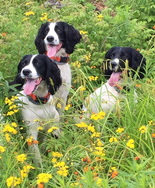 Biddable Calm Disposition, Windmill Hill Kennels Home